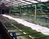 minro aquarium lanka pvt ltd guppy ornamental fish exporter