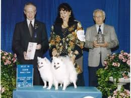 types of american eskimo dogs judging the american eskimo dog canine chronicle