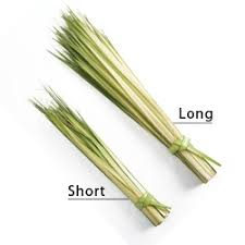 where to buy palms for palm sunday 87 best crafts palm weaving for my classes images on