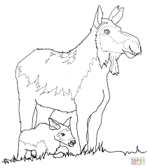 moose in the forest free animal coloring pages within