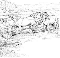 horses coloring lovers