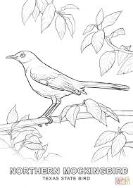 texas bird coloring free printable coloring pages
