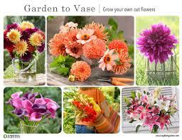 Cut Flower Garden by Look Book Inspiration For Your Cutting Garden U2013 Slowflowers Journal