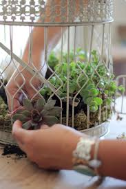 succulents meaning 499 best garden ideas succulents images on pinterest garden