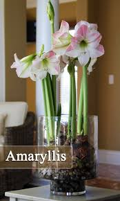 276 best house plants images on pinterest plants indoor plants