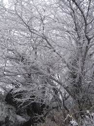 free images tree branch frost ice spring weather climbing