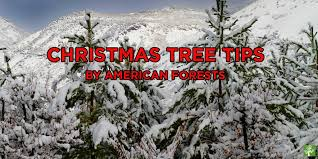 5 tips for the tree american forests
