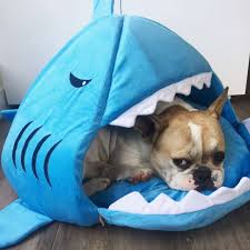 Cave Beds For Dogs Best Selling Shark Dog Cat Bed Jammin U0027 Jaws Shark Pet Bed