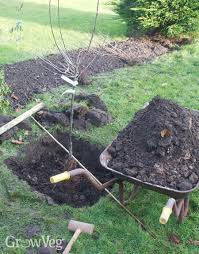 Transplant Fruit Trees - planting bare rooted fruit trees