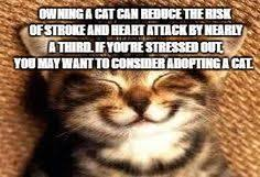 Meme Generator Cat - lil bub cat meme generator imgflip memes i ve made pinterest