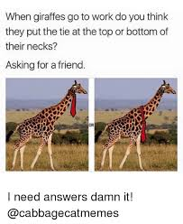 Giraffe Meme - when giraffes go to work do you think they put the tie at the top or