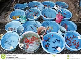 aquarium marine fish species aquarium design ideas