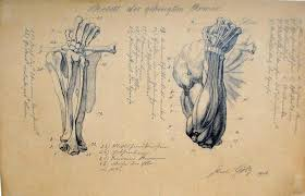 anatomical drawings this handcrafted life