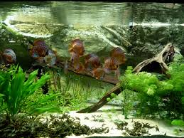 aquarium wallpaper desktop ololoshenka pinterest wallpaper