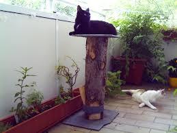 balkon katzensicher machen balkonsicherung ohne netz begrenzter freilauf katzenforum