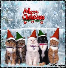 Merry Christmas Cat Meme - friday 22 12 2017 it s national date nut bread day do i hear