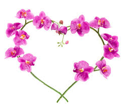 love flower wallpapers wallpaper cave