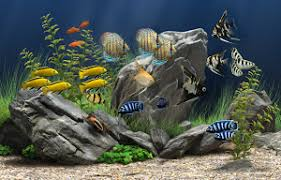 of fish ornamental fish industry culture in america