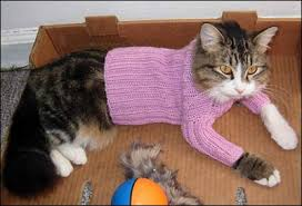 sweaters for cats crazyauntpurl cats in sweaters cats in hats dogs in the