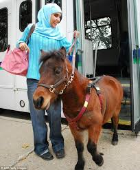 Dogs Helping Blind People Blind Woman Buys Guide Horse As Strict Muslim Parents Consider