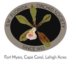 native plants fort myers southwest florida orchid society of fort myers u2013 where orchid