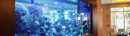 aquarium service in rexburg u0026 idaho falls aquarium wizards