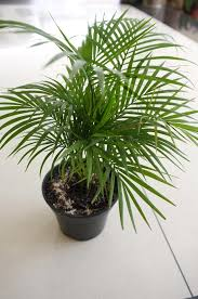 indoor plant best indoor plants for your home homesteading simple self