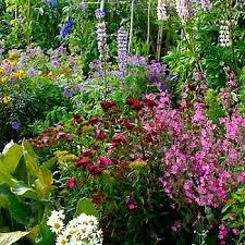 cottage garden ideas ideas u0026 advice diy at b u0026q