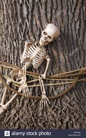 halloween decoration plastic skeleton tied to tree stock photo
