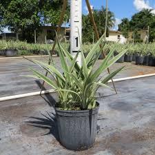 native plant nursery florida plants awesome home plant hollyhock native plant nursery ocala