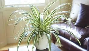 plante d駱olluante chambre 9 plantes d intérieur qui nettoient l air et qui sont quasi