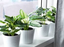 artificial plants faux plants plants that look real apartment therapy