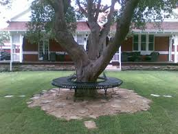 bench tree benches metal wrought iron tree bench metal ox