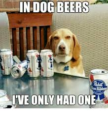 Funny Beer Memes - in dog beers blue ribbon ive only had one beer meme on me me