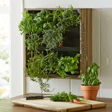 Indoor Vertical Gardens - indoor vertical gardens