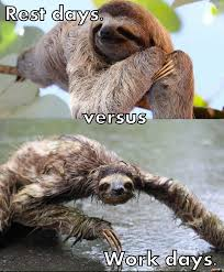 Bad Hair Day Meme - meme challenge 58 entry 1 sloth having a bad hair day steemit