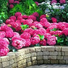 Flower Garden App by Magic Garden Live Wallpaper App Ranking And Store Data App Annie