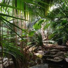 Tropical Plants For Garden - retail webshop for desert and tropical plants