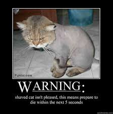 Newspaper Cat Meme - shaved cat meme 28 images let me in please meme to shave or not