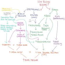 Anatomy And Physiology Midterm Exam Best 25 Physiology Ideas On Pinterest Human Anatomy And