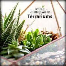 Best Indoor Plants For Oxygen by Guide To Terrariums