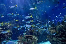 aquarium if you haven u0027t been the new aquarium in toronto is open and