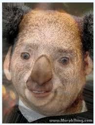 koala cage album on imgur