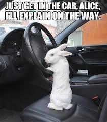 Alice Meme - get in the car alice alice in wonderland know your meme