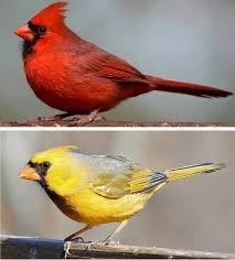 birds turn red
