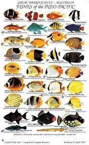 saltwater aquarium fish guide aquarium fish