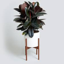 indoor plants singapore silent cleaners 8 house plants that purify while they beautify 99 co
