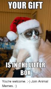 Meme Generator Grumpy Cat - your gift is in the litter box memegeneratornet you re welcome