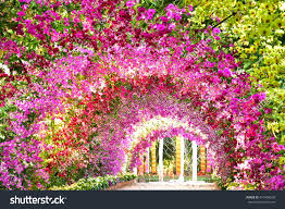 orchid tunnel stock photo 410496658 shutterstock