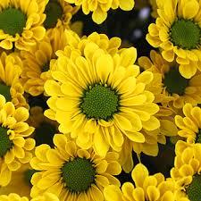 Yellow Pom Pom Flowers - micro pom flower